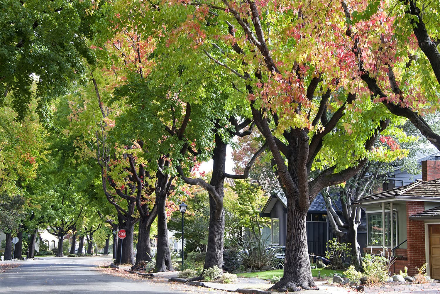 A tree-lined residential street